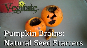 Germinate Pumpkin Seeds